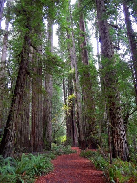 Redwoods Part 4 Jedediah Smith Redwoods State Park