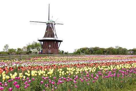 Holland Tulip Festival - U.S. Tours