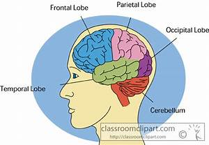 Anatomy   Human Brain 2613   Classroom Clipart
