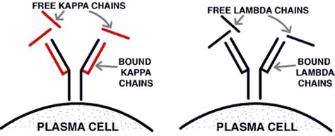 lambda free light chain 24 summary teamhaem