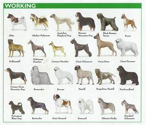 The 7 Dog Breed Groups Explained – American Kennel Club