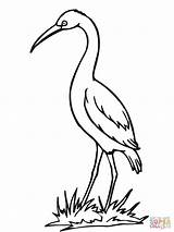 Coloring Crane Stork Pages Drawing Bird Sandhill Storks Clipart Printable Cartoon Clipartbest Baby Popular Print Carrying Getcoloringpages Clip Getdrawings Library sketch template