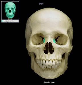 Lab Test 1  Skull