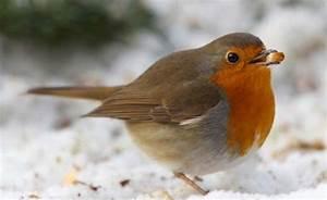 Kleine Vögel Im Garten : 76 besten v gel im garten bilder auf pinterest heimische ~ Lizthompson.info Haus und Dekorationen