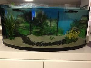 Poisson Aquarium Eau Chaude : poisson d eau chaude aquarium poisson d eau douce chaude ~ Mglfilm.com Idées de Décoration