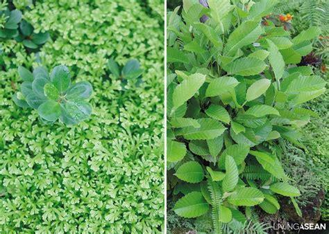 Namkhan Permaculture Eco Farm—chapter 10 Humid Tropics