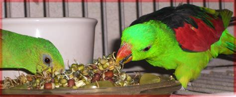 products best bird food ever