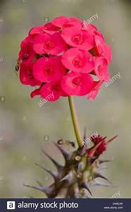 Pflanze Mit Roten Blüten : orange flower spikes stockfotos orange flower spikes ~ Eleganceandgraceweddings.com Haus und Dekorationen