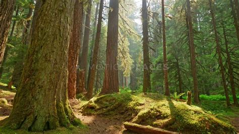 mossy forest timelapse  stock footage motion places