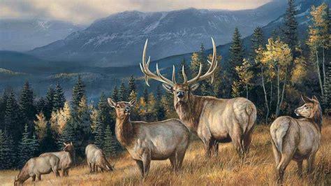 elk wallpaper hd