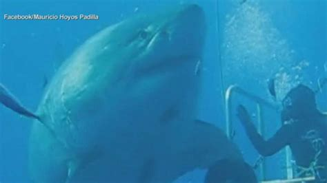 Real Life Jaws Video Abc News