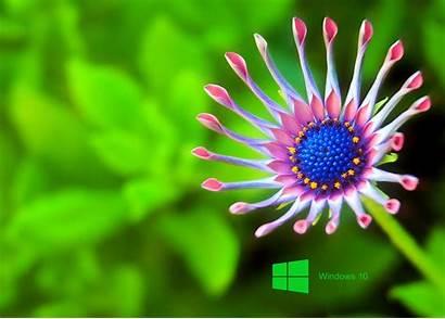 Windows Laptop Wallpapers Wiki