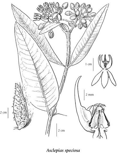 flora bc electronic atlas   flora  bc