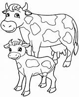 Cow Coloring Pages Cows Realistic Sheet Colouring Printable Adults Animals Adult Young sketch template