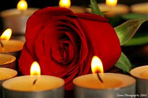 Love Rose In The Language Of Flowers The Red Rose Means