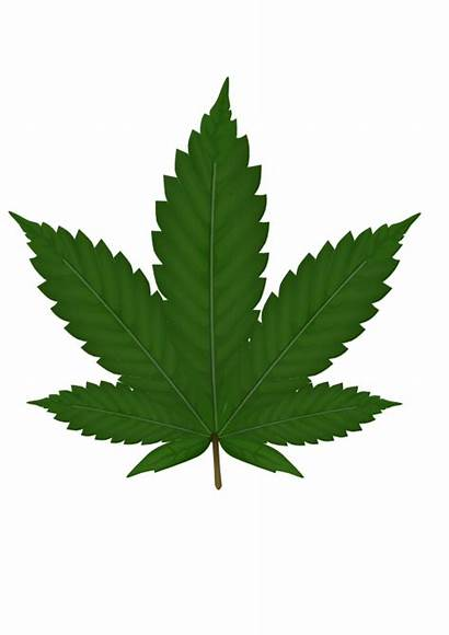Cannabis Weed Clipart Leaf Smoke Leaves Transparent