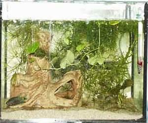 Aquarium Ohne Wasserwechsel : meine aquarien ~ Eleganceandgraceweddings.com Haus und Dekorationen