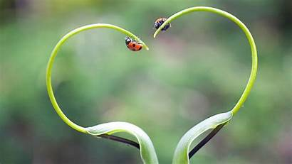 Plants Nature Ladybugs Wallpapers Desktop Background Px