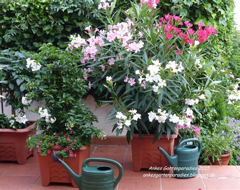 Winterharte Kübelpflanzen Schattig by Winterharte K 252 Belpflanzen Schattig Wohn Design