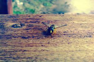 was hilft gegen wespennest was hilft gegen wespen tipps tricks bewertet de