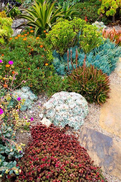succulent rock garden on succulents gardening