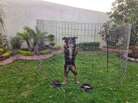 perros corral altura paneles pen dog play