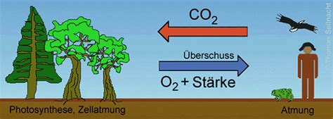 Algen Vorhang Wandelt Co2 In Sauerstoff Um by Kalk Und Kohlenstoff Kreislauf