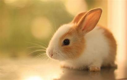 Bunny Bunnies Rabbits Background Wallpapers Backgrounds Wallpaperaccess