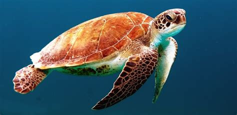 tortue animal peta rights morte odeur unsplash fois qui une tmg mer pires saviez odeurs monde vous soit aurait degage