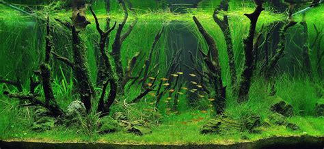 Precision Aquascapes - 1000 images about aquascaping on fish tanks
