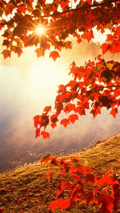 Autumn Wallpapers For Iphone by Iphone 6 Autumn Wallpaper 87 Images