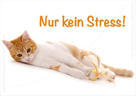 postkarte grusskarte entspannte katze nur kein stress