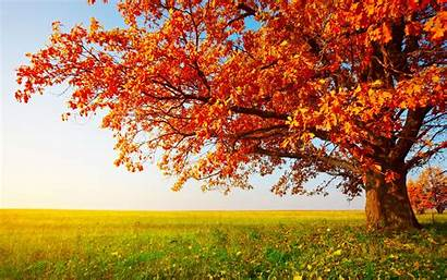 Tree Trees Desktop Backgrounds Background Wallpapers Wall