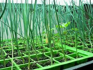 Repiquer Des Oignons : semis de poireaux en terrine ~ Voncanada.com Idées de Décoration