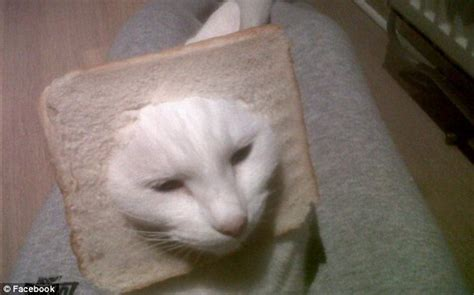 Has The Internet Completely Lost It Dressing Up Cats With