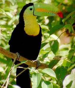 A Toucan in the Rainforest by xxxDonnaParsonsxxx on DeviantArt
