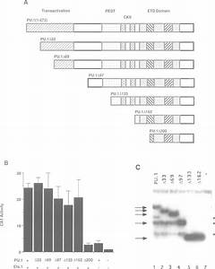 Activation Of The P70 Enhancer By Deletion Mutants Of Pu