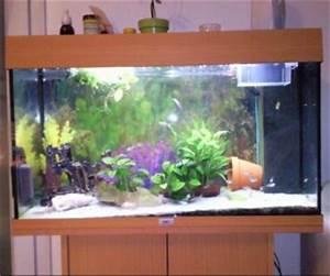 comment decorer un aquarium With comment realiser un jardin zen 15 comment decorer vase avec sable