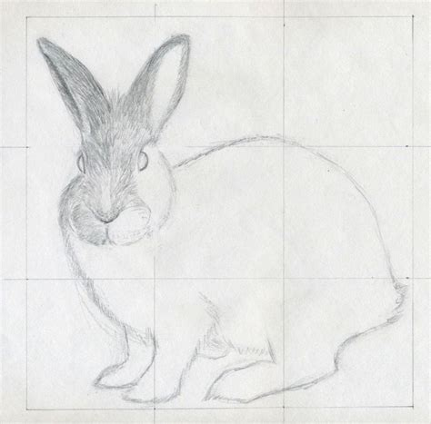 simple animal drawings  pencil continue   strokes