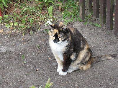 Katzen Aus Dem Garten Vertreiben Wie?