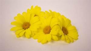 Getrocknete Blüten Kaufen : margariten gelb essbare bl ten kaufen ~ Orissabook.com Haus und Dekorationen