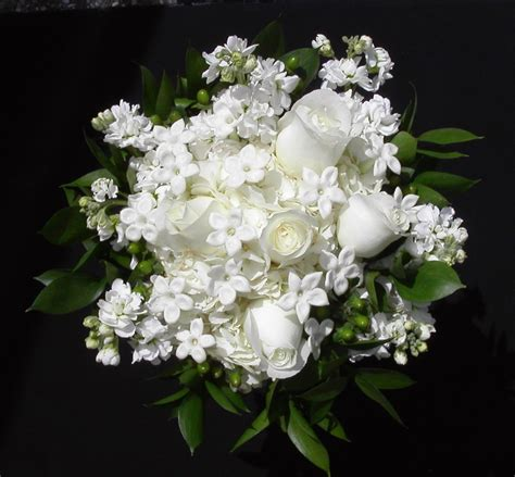 Check spelling or type a new query. Kumpulan Gambar Bunga Mawar Putih yang Cantik & Indah:Blog Bunga