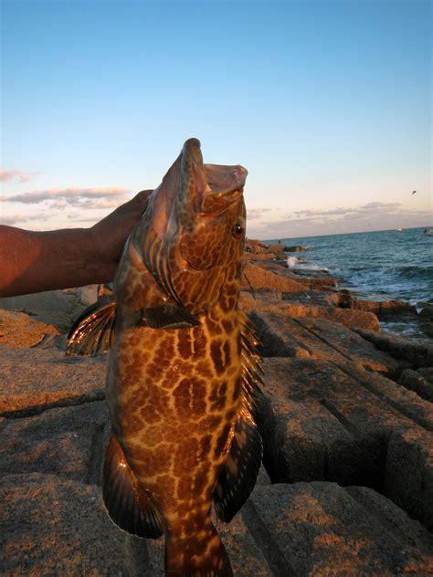aransas port texas jetties grouper rocks fishing gag waters coastal bend south nice fly
