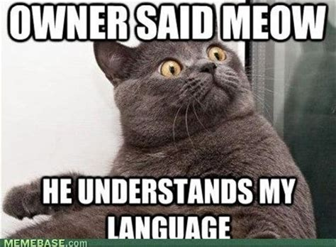 Cats Memes - funny cats image cat lovers indie db