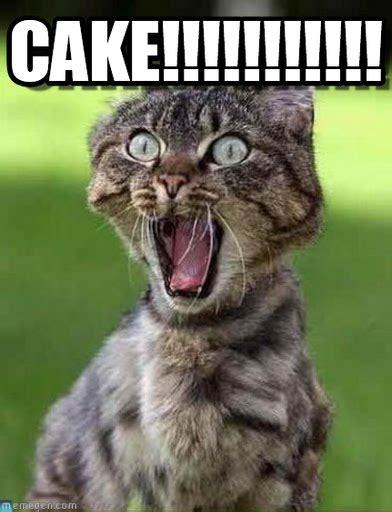 Cake Memes - cake meme image picsmine