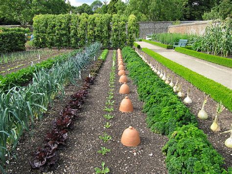 starting a veggie patch southeast green 7 great tips for anyone thinking about starting an organic vegetable patch