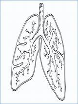 Coloring Lungs Respiratory System Sheet Printable Getcolorings Getdrawings sketch template