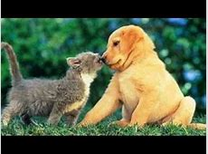 lustige katzenbilder funny cats YouTube