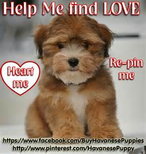 help me find love like comment repin me so i can find a