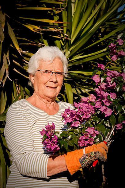 senior women summer  bush stock  pictures royalty  images istock